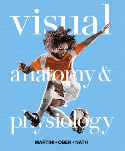Solution Manual (Complete Download) for   Visual Anatomy & Physiology