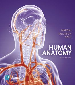 Solution Manual (Complete Download) for Human Anatomy